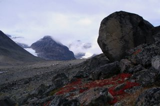 Sweden - Bright red plants in the scree - Kungsleden 2006