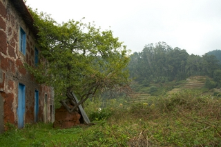 An old farm house in Madeira with typical terraces in the background